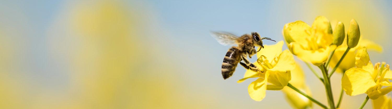 Bee-BannerImage.jpg